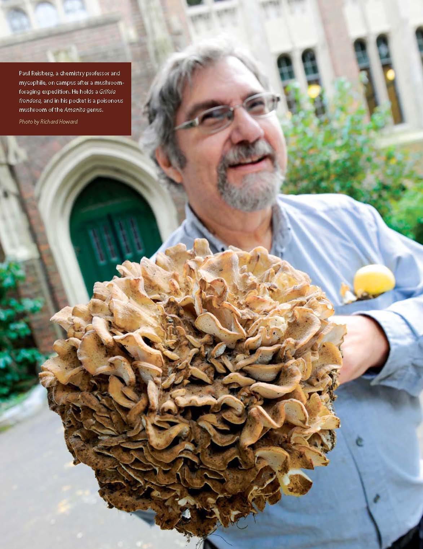 large chicken mushroom